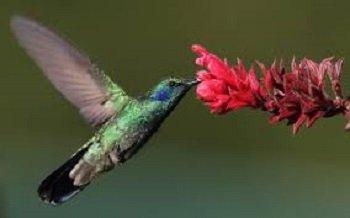 Essere come un colibrì